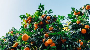 The Benefits of Vitamin C on the Body
