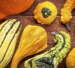 squash nutrition facts