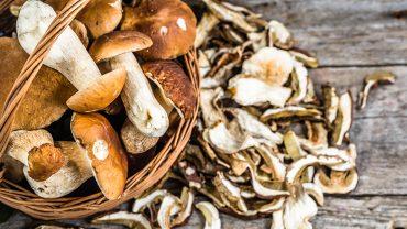 Health-Benefits-of-Mushrooms